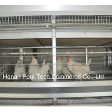 Poul Tech Hot Sale Breeder Chicken Cage (H Frame)