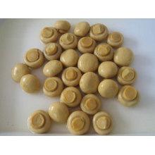 Conservas de cogumelos inteiras