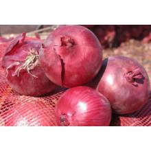 Venta al por mayor productos de china cebolla roja