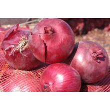 wholesale china products red onion
