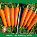 Suntoday híbrido vegetal surtido científico de nombres para plantar plantones de hortalizas orgánicas comprar venta de semillas de zanahoria en línea (51003)
