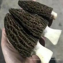 Cogumelos secos morchella vulgaris