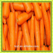 fresh carrot for healthy food market thailand M size