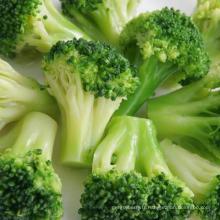 Poudre de pousses de brocoli vert naturel biologique de haute qualité