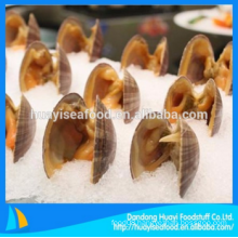 good quality frozen surf clam with low price