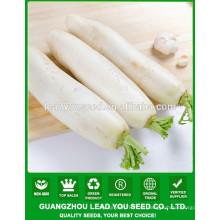 NR13 Weiyi Hybrid blanco rábano semilla