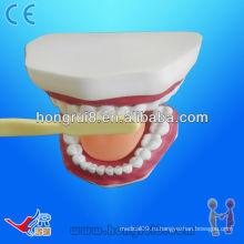 Модель зубоврачебной помощи модель 28 зубов