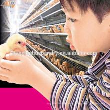 Jaula de pollo para la venta / jaulas en batería gallinas ponedoras / equipos para avicultura