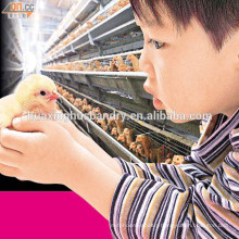 Chicken cage for sale / battery cages laying hens/poultry farming equipment