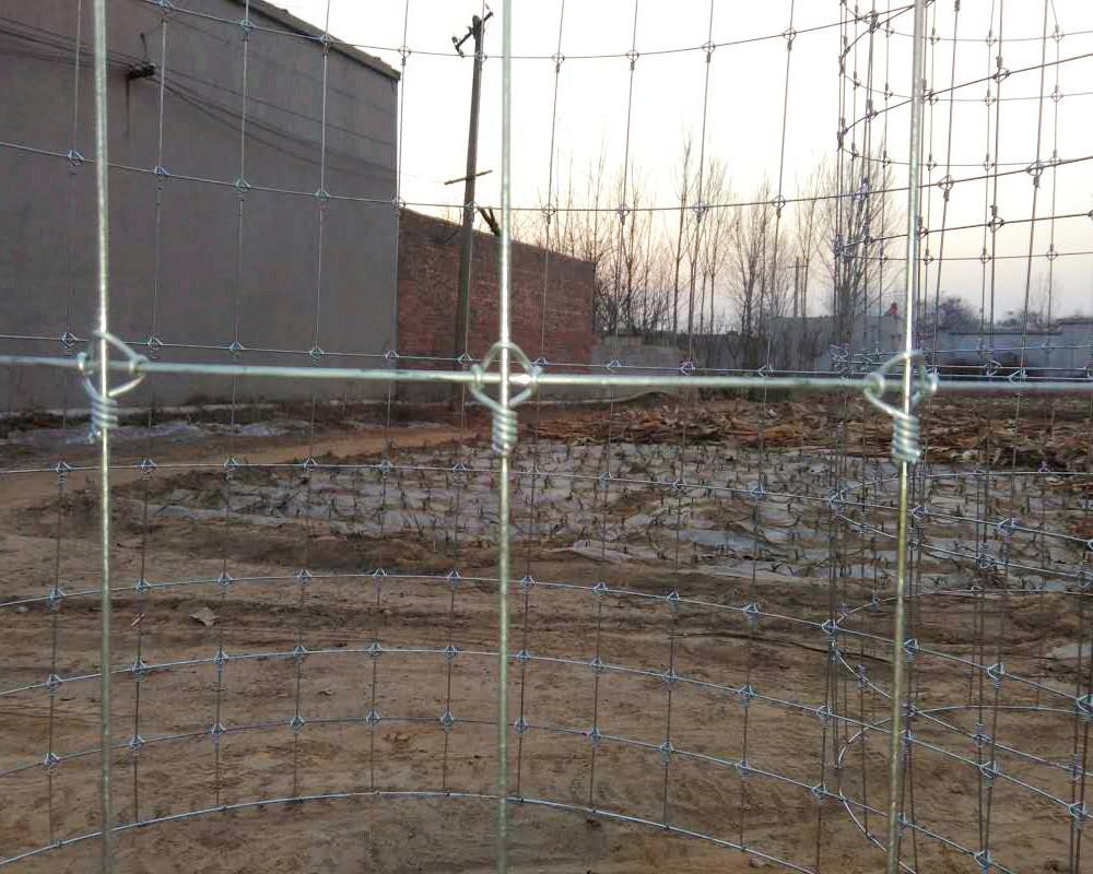 Stahl & Draht gewebt Feld Zaun China Hersteller