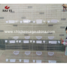 Wholesale Pigeon Racing Products Supplier