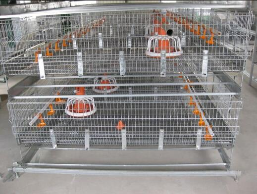 Stainless Steel Chicken Cages