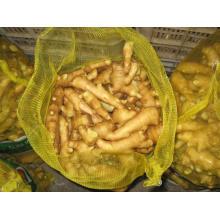 Gengibre fresco para o mercado de Sudeste Asiático