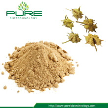 Tribulus Terrestris Extract 파우더, 대형 스톡