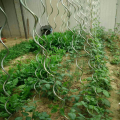 Power Coated 7Mm Tomato Plant Spiral Stakes