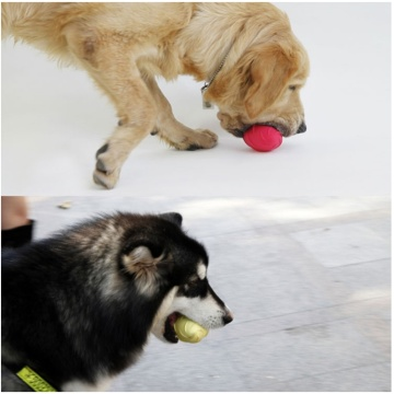 Rugby Pet Ball Tandreiniging Training Hondenspeelgoed