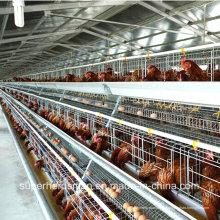 Geflügelfarm-Ausrüstung für Schichten und Broilers
