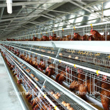 Poultry Farm Equipment for Layers and Broilers