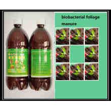 Fertilzer de algas bio orgânico para dispersão ------- Fertilzer de folhagem