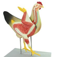Compre un modelo anatómico de gallina de plástico 1200 Gallina Animal, 8 partes
