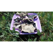 Chinois séché blanc dos noir champignon coupe prix