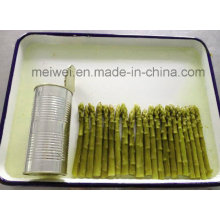 Canned Food 430g Canned Green Asparagus in Tin