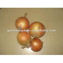 New Fresh Yellow Onion