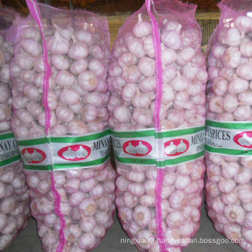 Cheap/low price Chinese new crop fresh garlic for malaysia