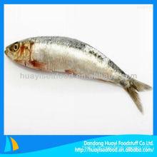 Gefrorene sardine hgt großhandel