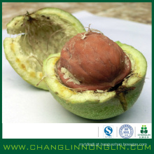 Orgânico verde cheio de nozes de casca fina de alta qualidade de alta proteína