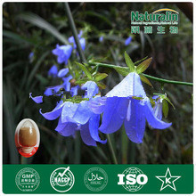 100% Natural&Professional Adenophora Extract Powder