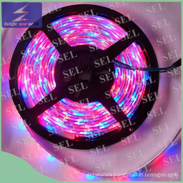 DC12V SMD2835 RGB Colors Flexible LED Strip Light