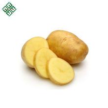 Batata Frita de Fazenda / Batata de Alta Qualidade / Batata de Diamante