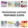 Medical Human Histology Prepared Slides