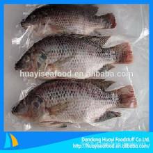 Vários tamanhos de venda quente congelado redondo tilapia peixes (eviscerado e escalado)