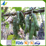 New products Mucuna Pruriens extract for depression and anxiety