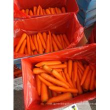 Свежий морковный из Китая на продажу