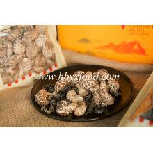 Alimento secado cogumelo secado da flor do chá do peso 2-3cm