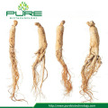 Ginseng buyer near me