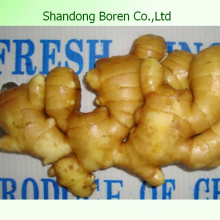 2015 Gemüse Neuer chinesischer frischer Ingwer