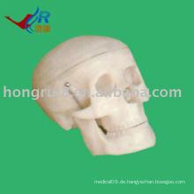 ISO Kleine Schädel Modell, medizinische anatomische Schädel Modell