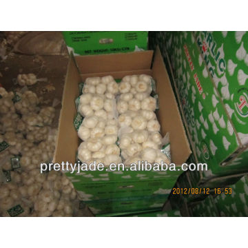 china white garlic