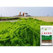 Algues biologiques Fertilisation organique à base de microbienne pour l'assèchement des sols