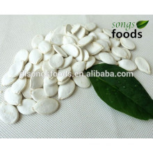 2014 Crop Dry Edible Snow White Pumpkin Seeds In Shell