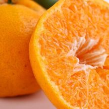 Top Quality Valencia Oranges