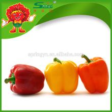 Venta al por mayor mezcla de pimiento congelado, pimiento amarillo / verde / rojo