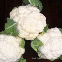 Brócoli chino coliflor