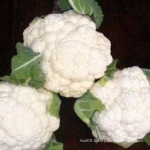 Chou fleur chinoise brocoli