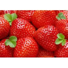 new crop IQF bulk strawberries whole