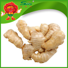 New crop shinning yellow ginger dried ginger